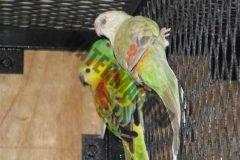 cencal-aviary-086