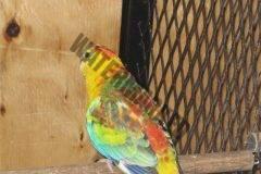 cencal-aviary-088