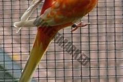 parrot_mutation10_2