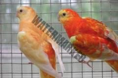 parrot_mutation19_2