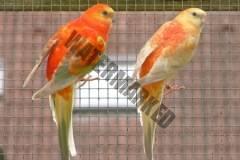 parrot_mutation7