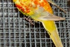 parrot_mutation78_2