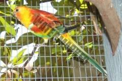 parrot_mutation83_2