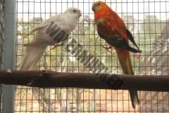 parrot_mutation88_2