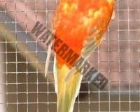 parrot_mutation8_2