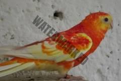 parrot_mutation92_2